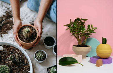 rośliny dla leniwych kwiaty doniczkowe