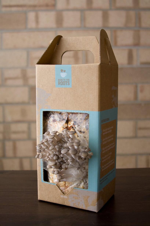 pudełko zgrzybami