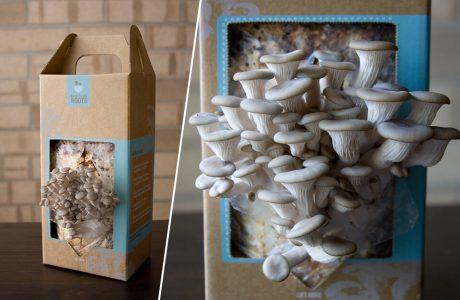 grzybnia wyrastająca z pudełka