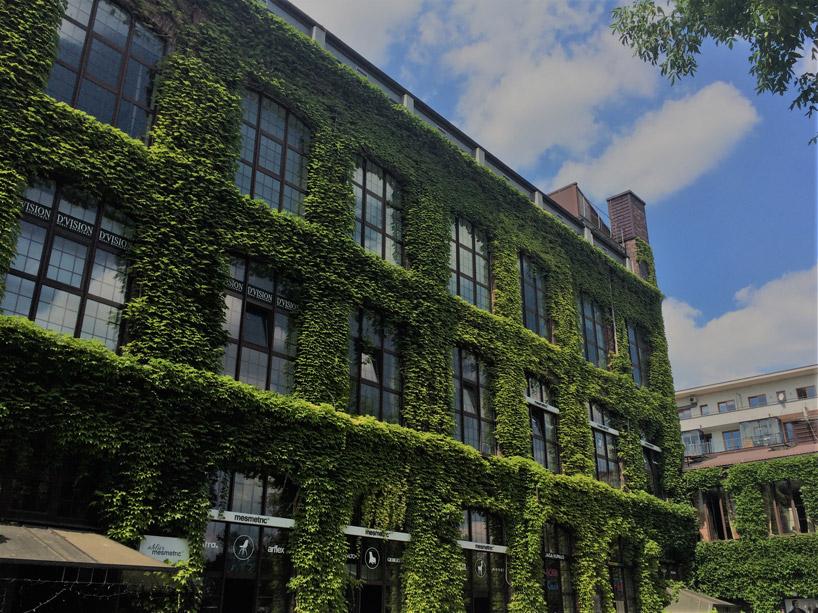budynek zduża ilością zielonych liści