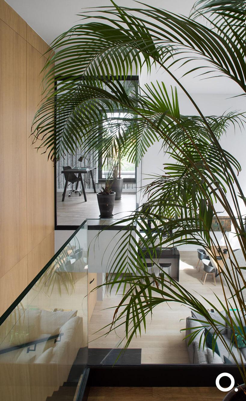 wnętrze wzgodzie zbiophilic design od Studio.O. duża roślina na piętrze przy drewnianych schodach ze szklaną balustradą