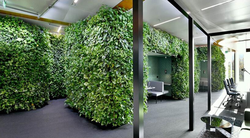 boxy wprzestrzeni biurowej open space porośnięty zieloną roślinością