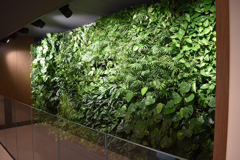 żywa zielona ściana wprzestrzeni biurowej