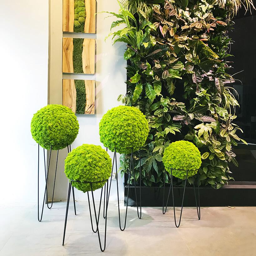 cztery zielone kule zmchu wmetalowych kwietnikach na tle zielonych obrazów zdrewna imchu