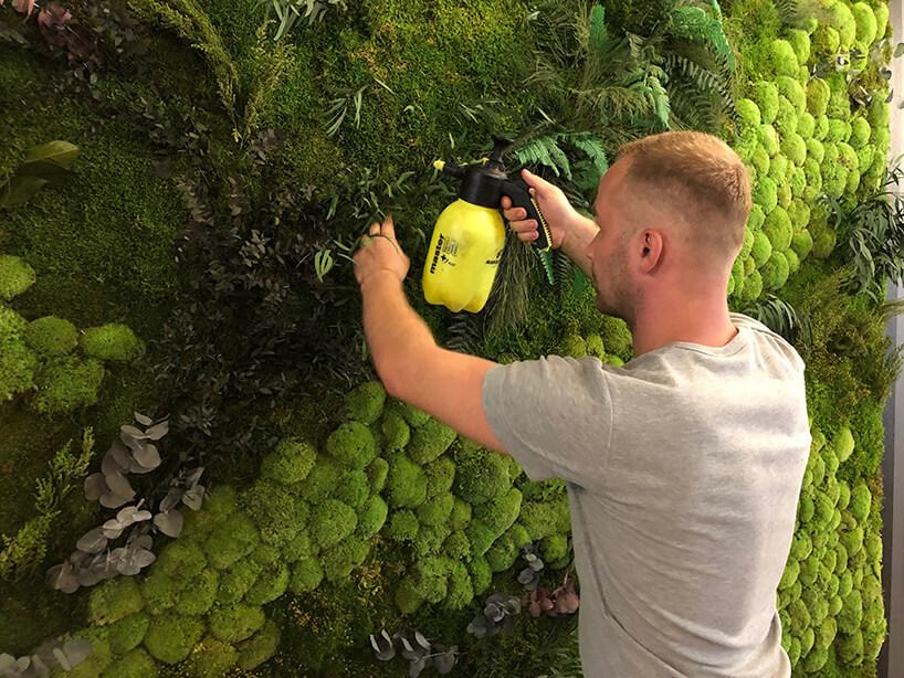 mężczyzna podczas podlewania zielonej ściany zmchu od GreenMakers