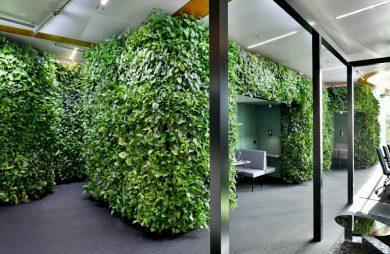 boxy w przestrzeni biurowej open space porośnięty zieloną roślinością