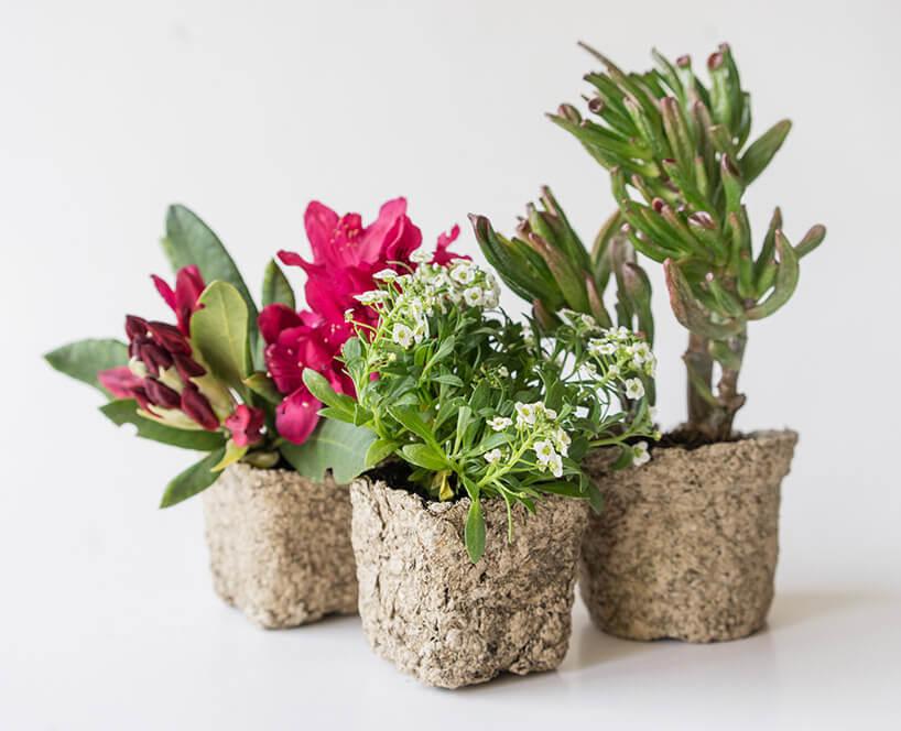 trzy kwiatki wwyjątkowych doniczkach