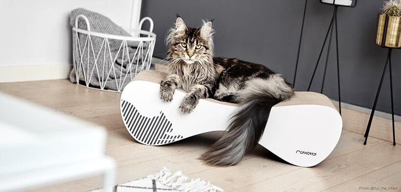 kot zdużymi uszami na drapaku
