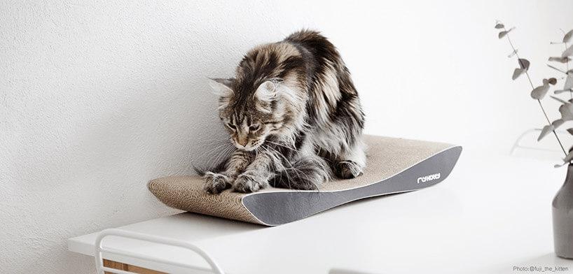kot zdużymi uszami podczas drapania