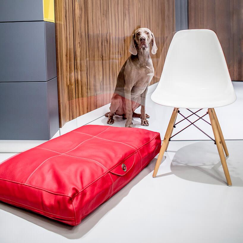 pies przy czerwonym legowisku