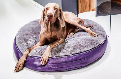 duży pies na szaro-fioletowym legowisku