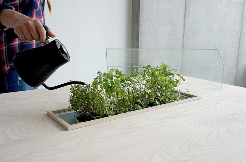 podlewanie ziół we wnęce drewnianego stołu