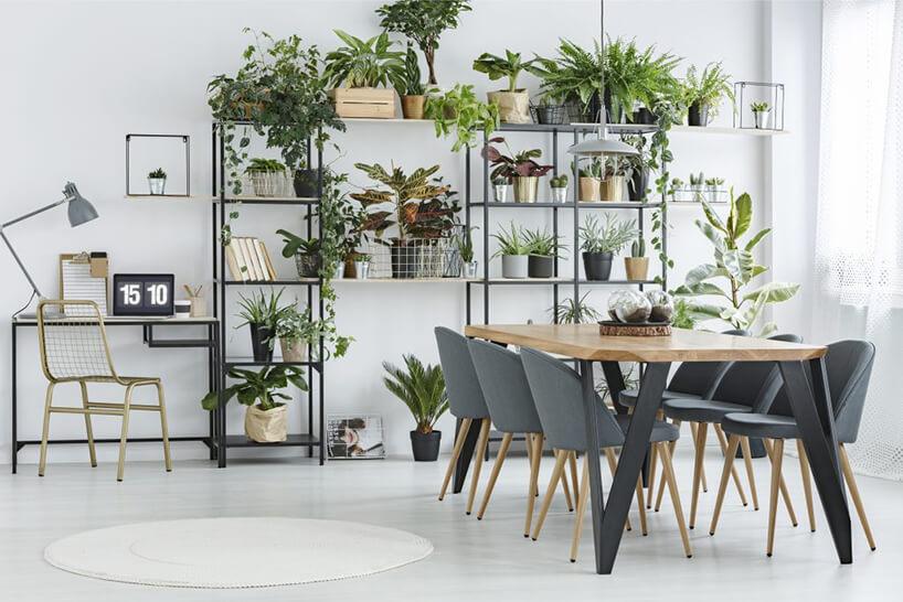 wyjątkowy drewniany stół HooVer od IWWT zszarymi ukośnymi nogami na tle duże kwietnika zdużą liczbą kwiatów
