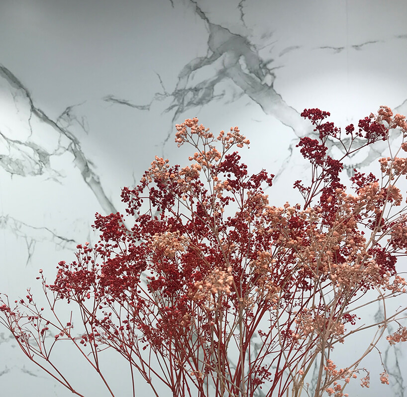 wyjątkowa biała kamienna ściana jako tło dla czerwonej rośliny