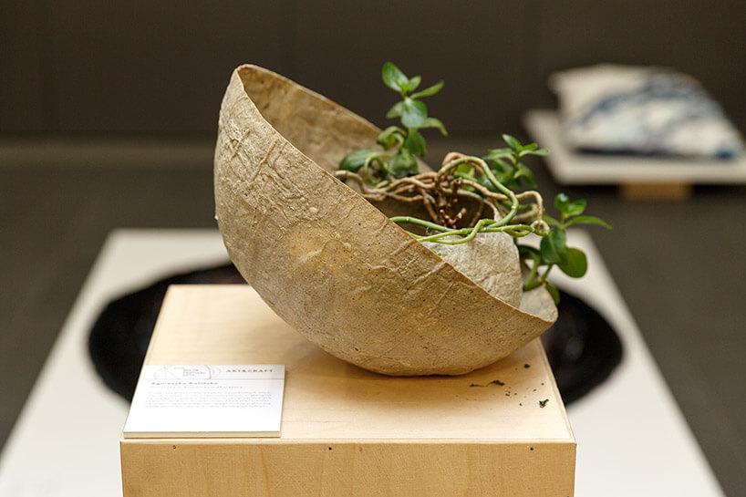 roślina wnietypowej cienkiej osłonce
