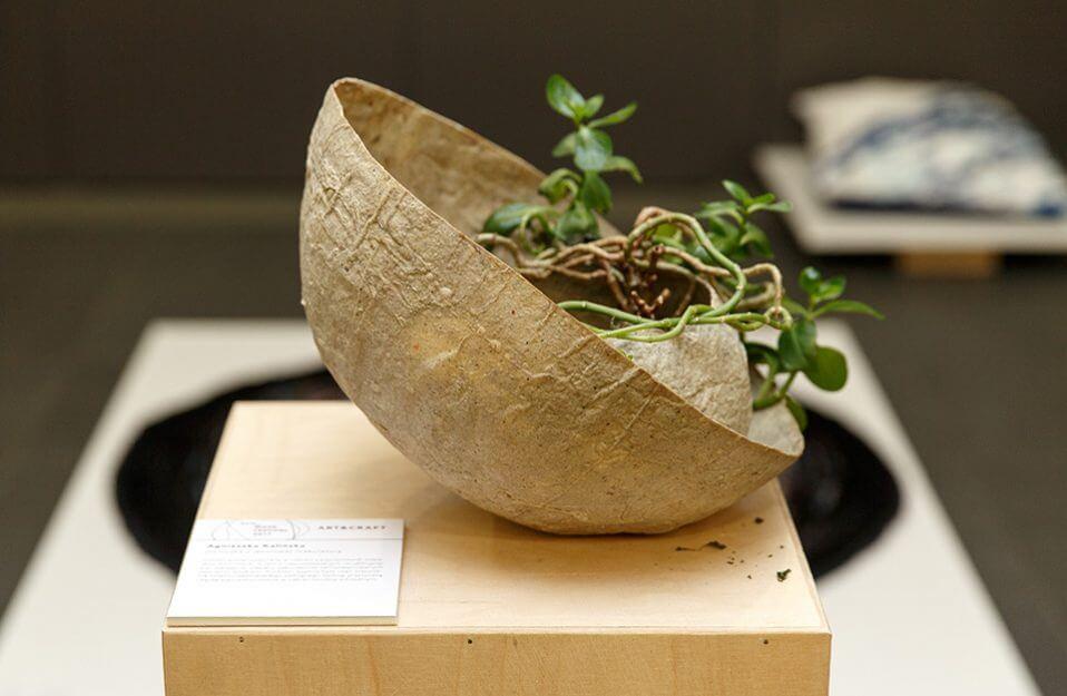 roślina w nietypowej cienkiej doniczce