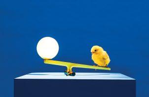 pisklak siedzący na ramieniu lampy na niebieskim podeście