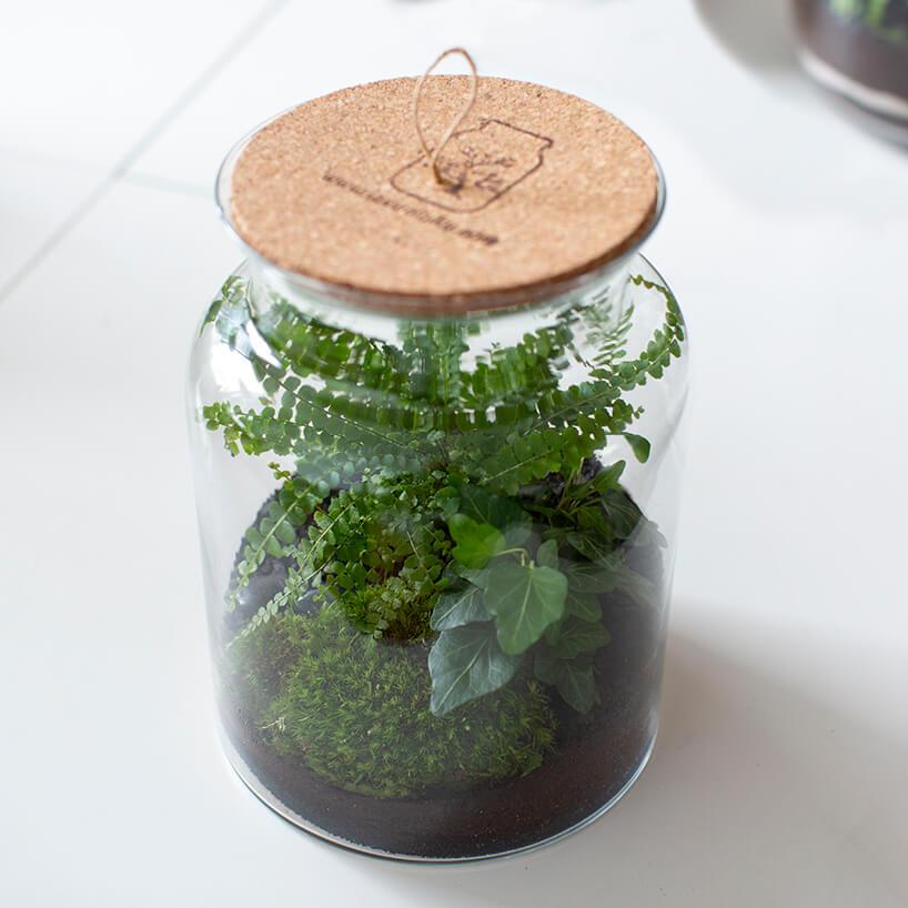 szklany słój przykryty podkładka zkorka zroślinami wśrodku
