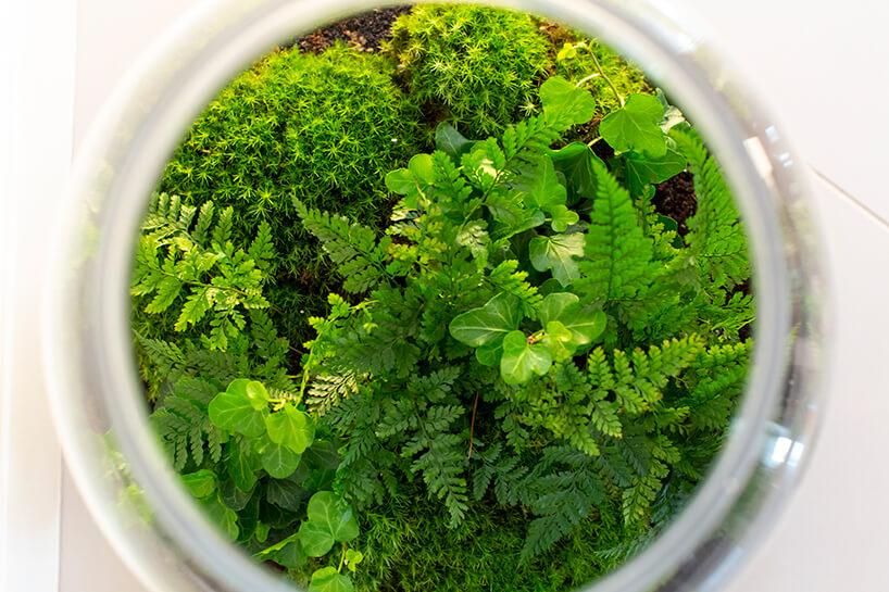 widziane zgóry rośliny wszklanym naczyniu