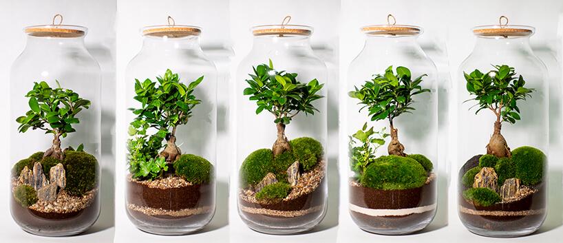 zestawienie drzewka bonsai widzianego zróżnych stron