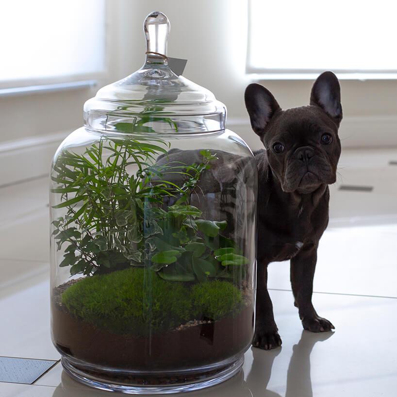 czarny pies stojący za dużym słojem zroślinami wśrodku