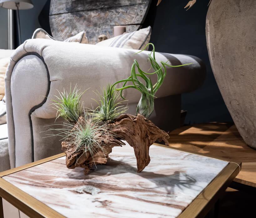 trzy rośliny osadzone wstarym kawałku drewna na stoliku zkamiennym białym blatem