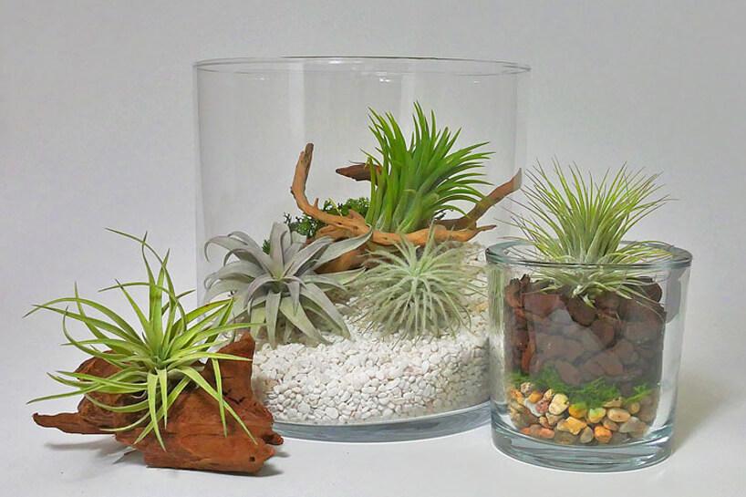 sukelenty wdwóch szklanych naczyniach