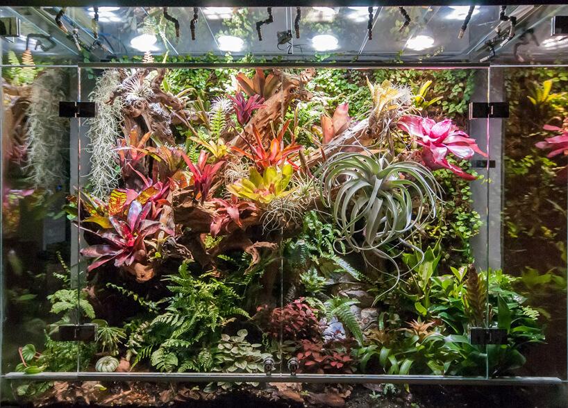 duże szklane wiwarium zwieloma roślinami