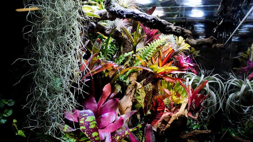 różnorodne rośliny zkolorowymi liśćmi wdużym szklanym wiwiarium