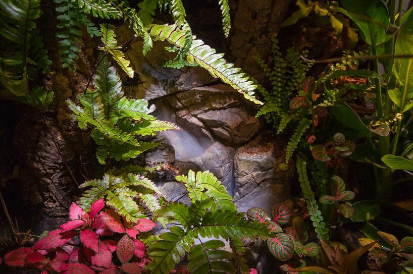 skały przysłonięte paprociami iinnym roślinami tropikalnymi