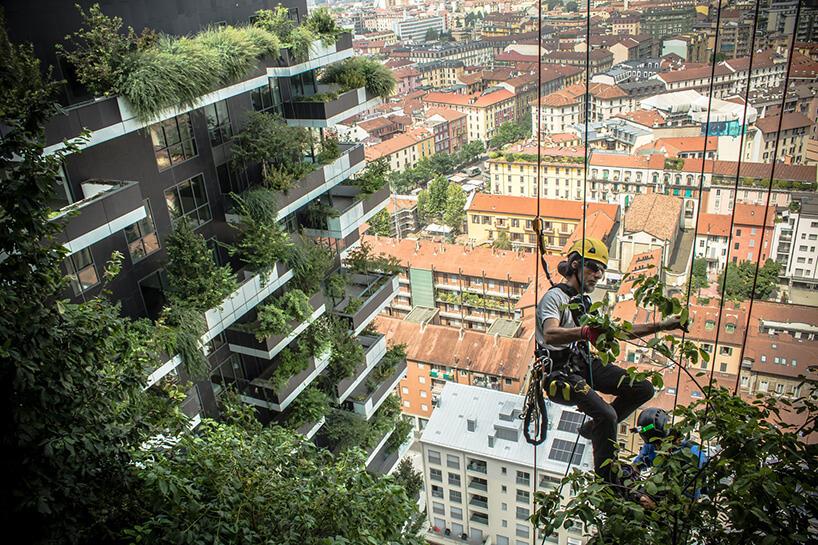 alpinista pielęgnuje zieleń wieżowca