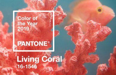 różowy koral i ryba jako tło dla koloru roku PANTONE