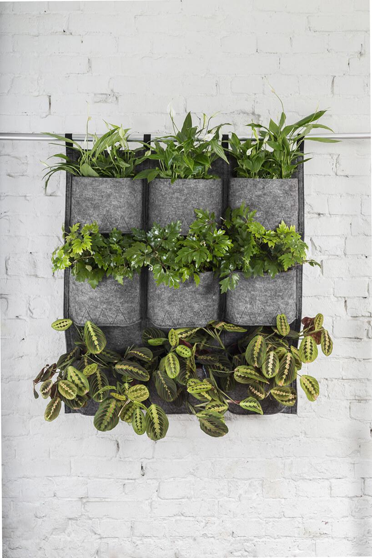 zielone rośliny zwiszących doniczek