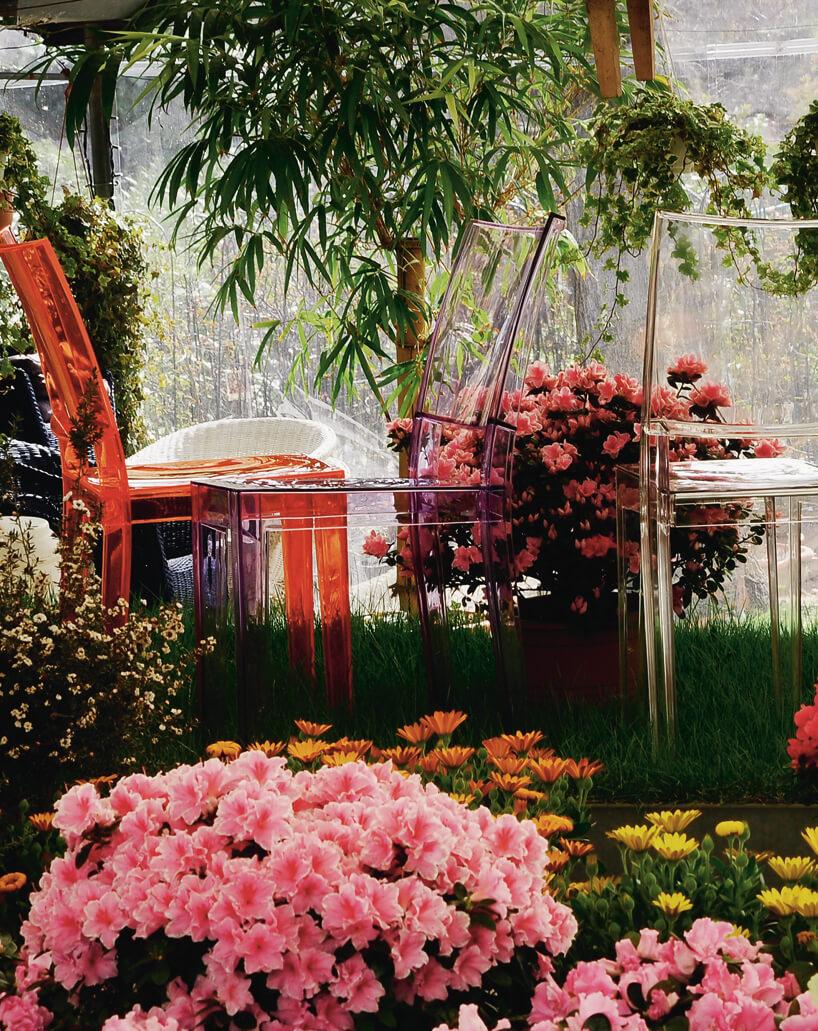 plastikowe przeźroczyste różnokolorowe krzesła LaMarie Kartell wotoczeniu kwiatów woranżerii