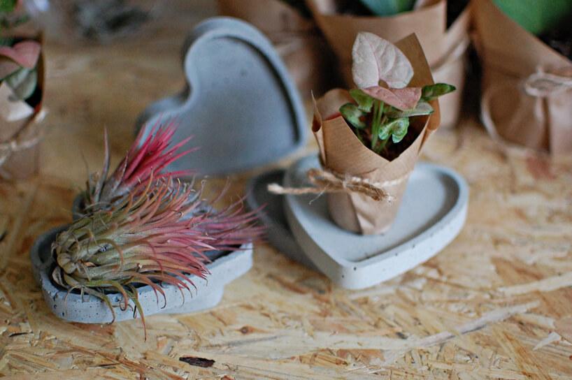 dwie małe roślinki na betonowej podstawce wkształcie serca