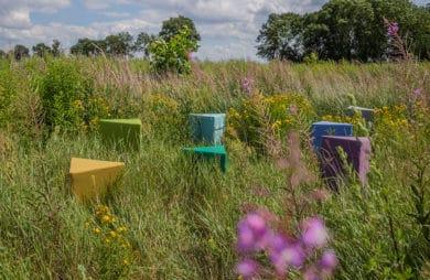 kilka kolorowych puff VANK na łące z wysoką trawą za fioletowym kwiatem