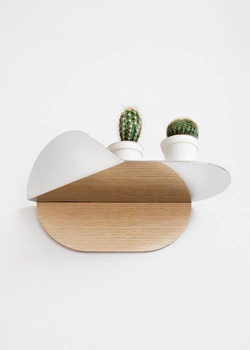 regał zzielonymi kaktusami