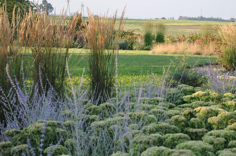 zdjęcie zaaranżowanego ogrodu naturalistycznego na tle pół