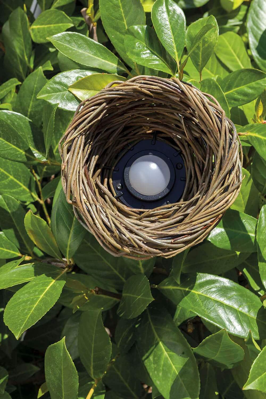 Natura wnowym świetle – rozwiązania, które podkreślą żywą architekturę ogrodu