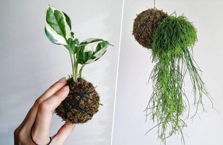dwa nietypowe bonsai kokedam