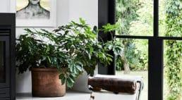 dom zmpnochromatycnzymi kolorami przełamanymi naturalną zielenią roślin przy czarnych surowych elementach