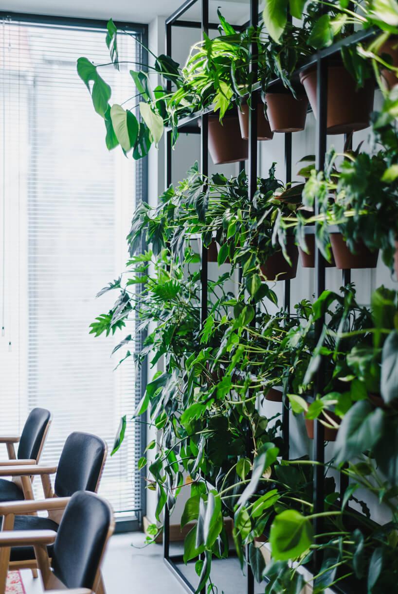 nowoczesne wnętrze open space intive ściana zczarncyh prędów służacych jako mocowanie dla wielu doniczek zzielonymi roślinami