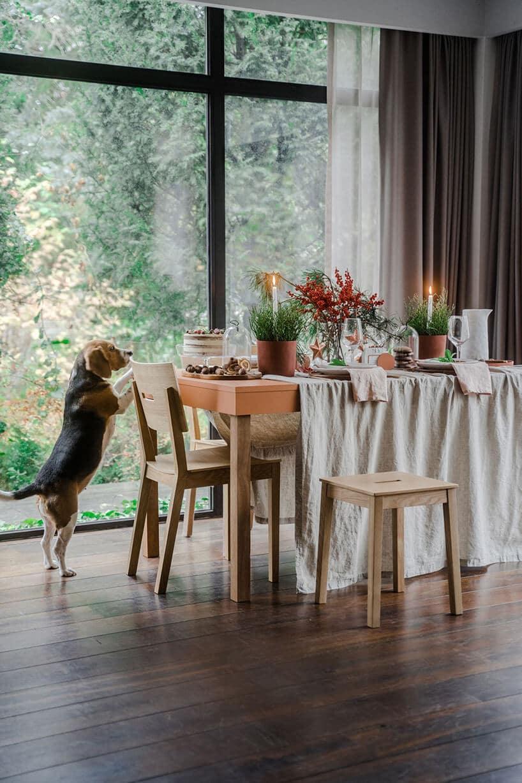 pies opierający się okrzesło przy stole zdługim obrusem idodatkami