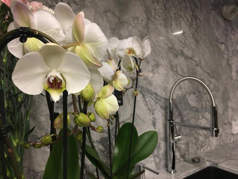 orchidee na tle granitowej ściany