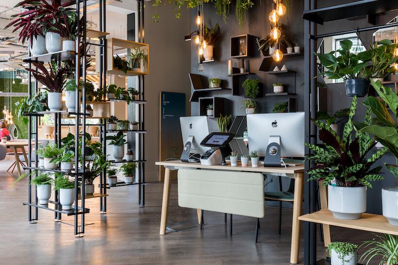 Biuro Uncommon wLondynie od Nowy Styl Group zduża ilością roślin stojących iwiszących