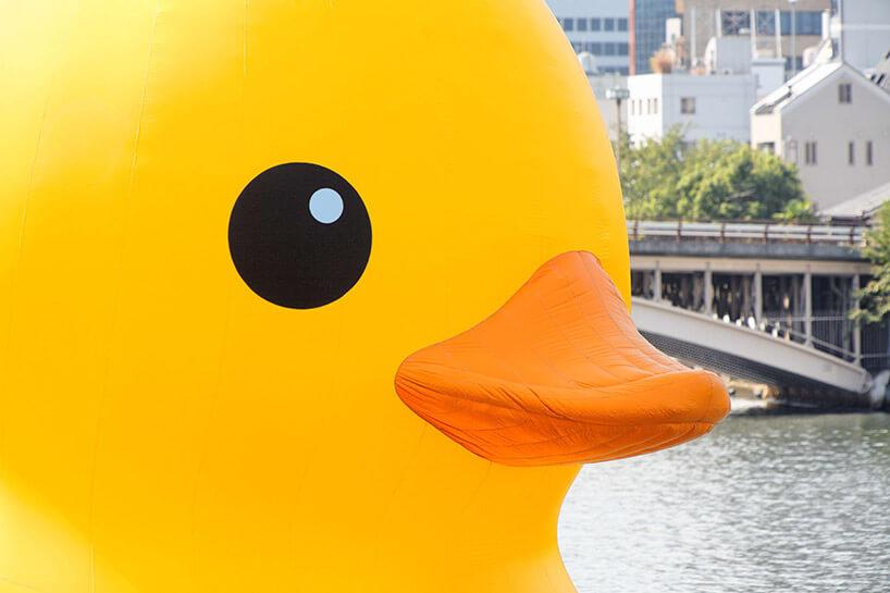 głowa ogromnej żółtej kaczki