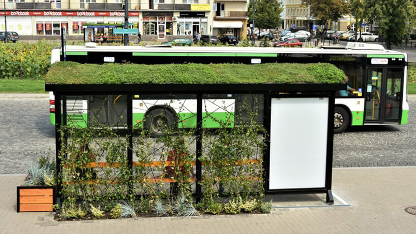 zdjęcie zielonych przystanków komunikacji wBiałymstoku zroślinami na dachu ipnączami przy przeszklonych elementach