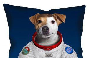 pies na poduszce astronauta