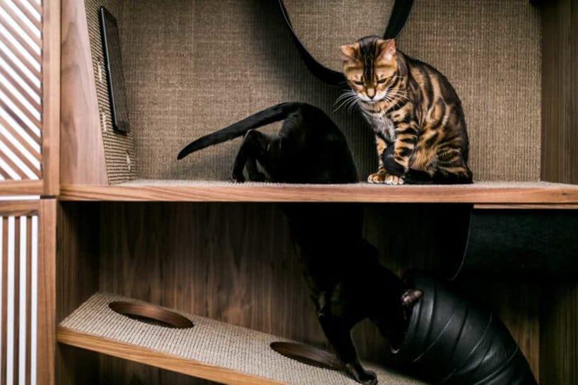plac zabaw dla kotów wszafie