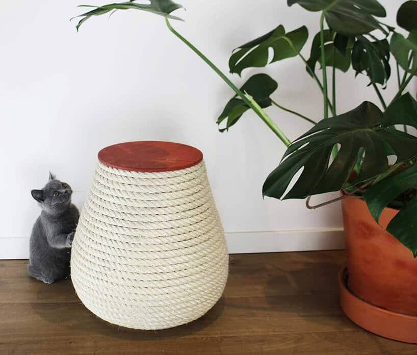 zielona roślinka wczerwonej doniczce obok białego wazonu